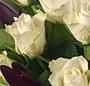 Trandafiri stralucitori