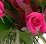 Trandafiri roz de lux