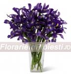Buchet irisi